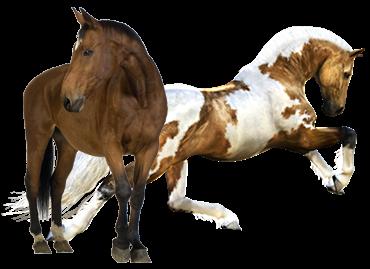Dejte svému koni to, co skutečně potřebuje.